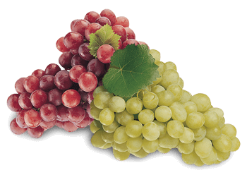a picture of grapes
