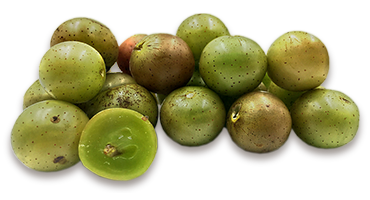 a picture of scuppernong grapes